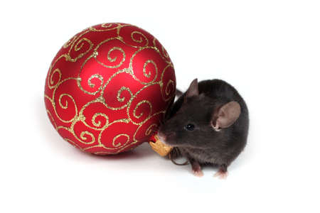 little black mouse and red christmas ball photo