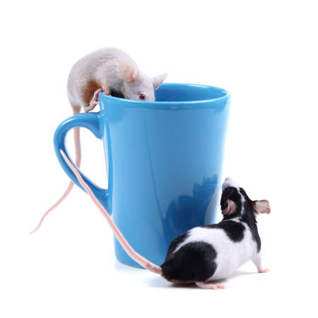 little fancy mice and a blue cup Stock Photo