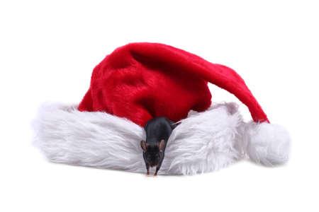 Little mouse on Santa hat