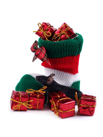Little black mouse and Christmas stocking full of presents Stock Photo
