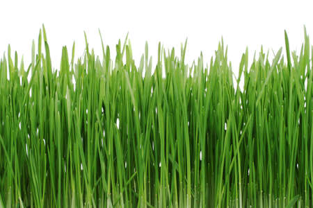 isolaten: green grass isolaten on white background