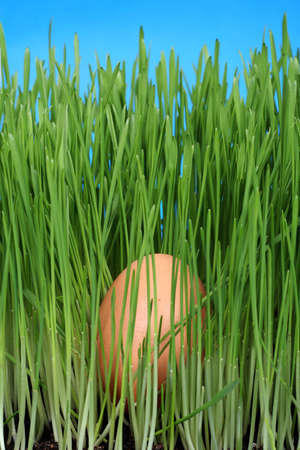 close up of egg nestled in the green grass with blue sky photo
