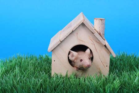 artificial model: little fancy mouse in a little wooden house on green grass