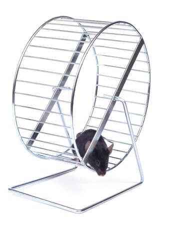little mouse on an exercise wheel on white background