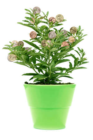 pot of money: money tree - green plant with golden coin, in a green pot