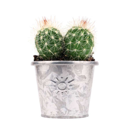 potted plant cactus: green cactus in metal flower pot on white background