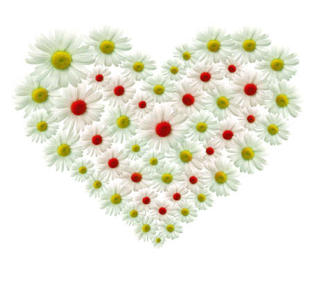 Big heart made of white flowers Stock Photo - 6241578