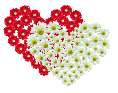 red gerber daisy: 2 Big heart made of red and white flowers