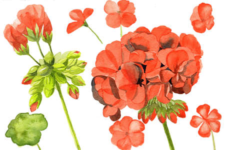 watercolor illustration of red poppy flowers Stock Photo