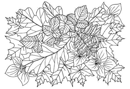 autumn leafs: Autumn leafs in black and white. Doodle art for coloring book Illustration