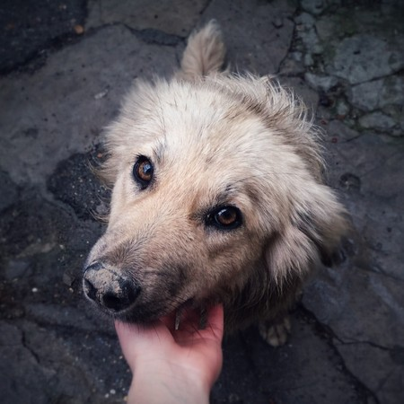 occhi tristi: cute street dog looks at the camera wth its sad eyes
