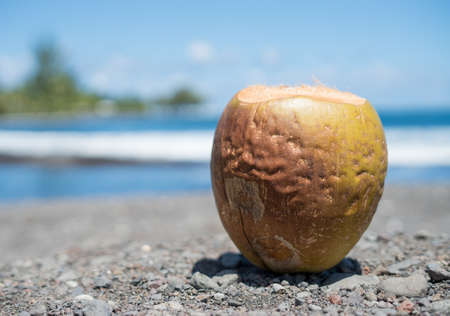 A coconut put on the ground on an island
