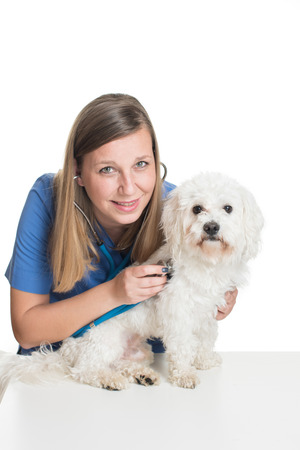 examining: Young female veterinarian examining pet dog