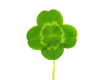 four leaf: Tr�bol de cuatro hojas, s�mbolo de San Patricio s d�as
