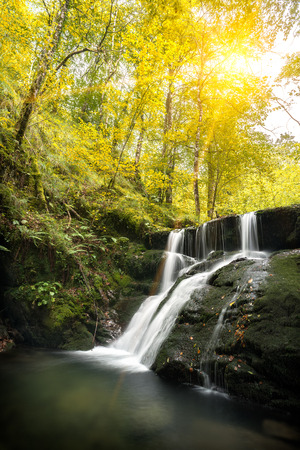 Autumn landscape scene in a beech forest with a stream of flowing river forming a waterfall on mossy green rocks, and sunbeams passing through yellow tree leaves, in Asturias, Spain, Europe.