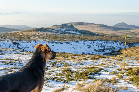 distance: Dog in the mountain looking at distance