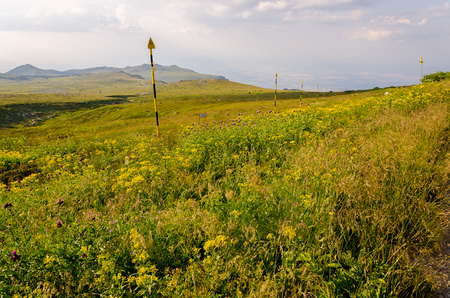 Green meadow at Vitosha national park during the day, Bulgaria