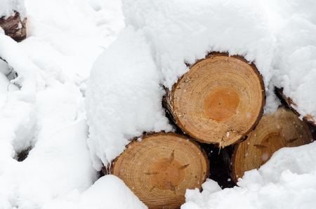 Close-up of pile of snow covered timber logs underneath a thick snow cover Stock Photo