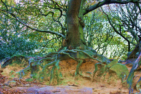 Tree Roots Reaching Out. Stock Photo - 2089960