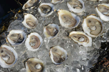 decadence: oysters