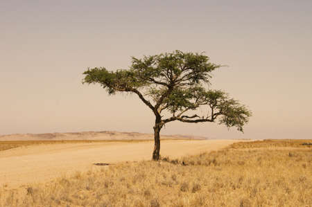 namibia: african tree Stock Photo