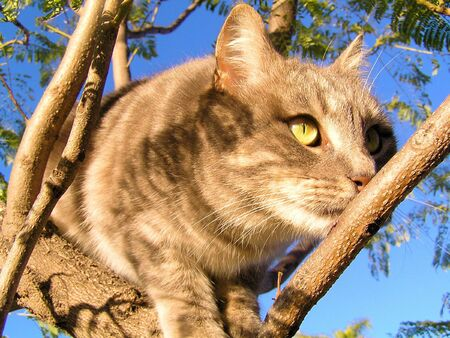 A tabby kitten in a tree, hiding behind a branch and spying on something in the distance.  photo