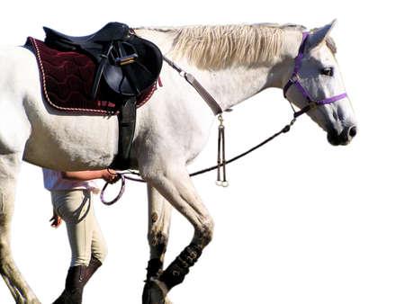 alongside: A jockey walking alongside next to her horse.