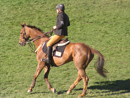 reins: A male jockey pulling on the reins to stop the horse.