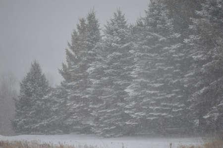 wintery: wintery day