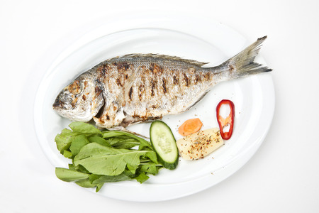 gilthead bream: gilt-head bream