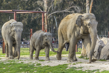 Elephant Family photo