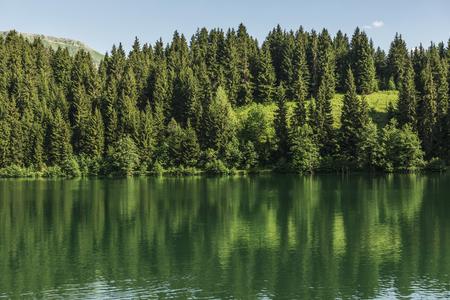 Reflections of a Coniferous Forest on a Black Lake,Artvin,Turkey. Stok Fotoğraf