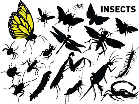 insects Stock Vector - 3728804