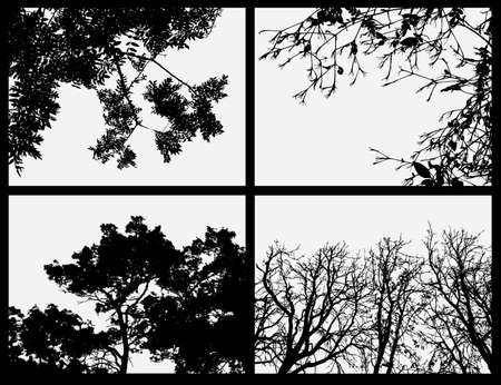 vector collection of trees Stock Photo - 6152801