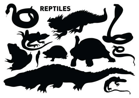 vector collection of reptiles Stock Photo - 6152804