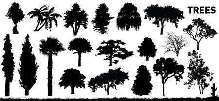 vector collection of trees photo