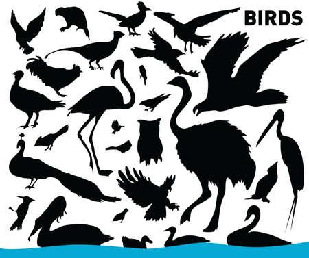 vector collection of birds photo