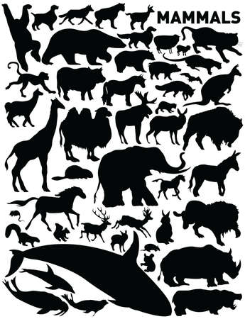 vector collection of animals photo