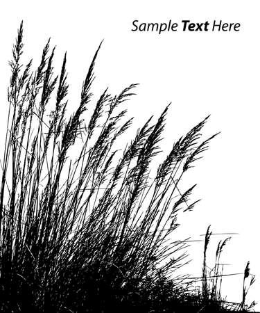reeds: vector reeds Illustration
