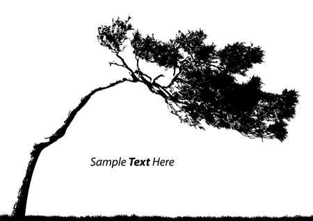 벡터 나무