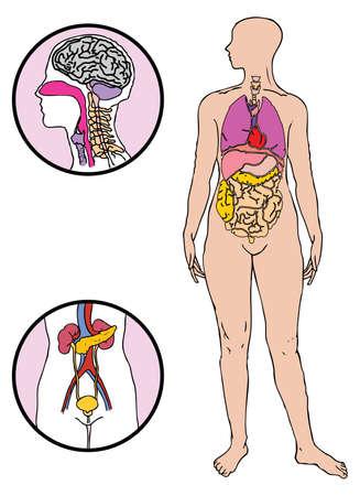 ベクトルの体の図  イラスト・ベクター素材