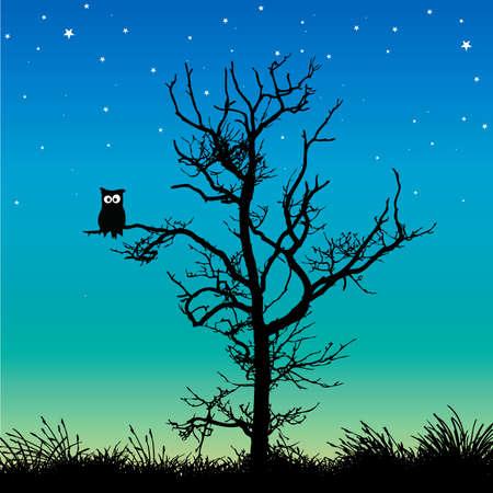night bird: owl in a tree