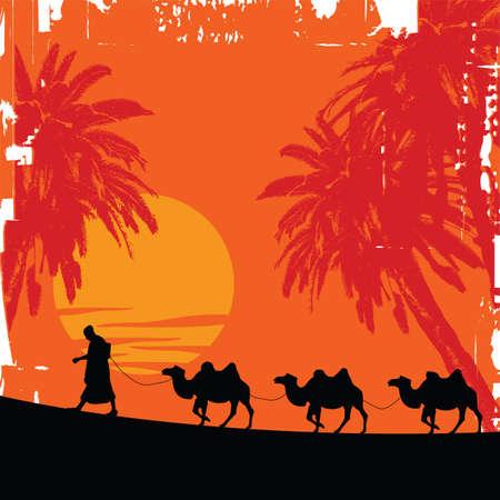 middle east: camels
