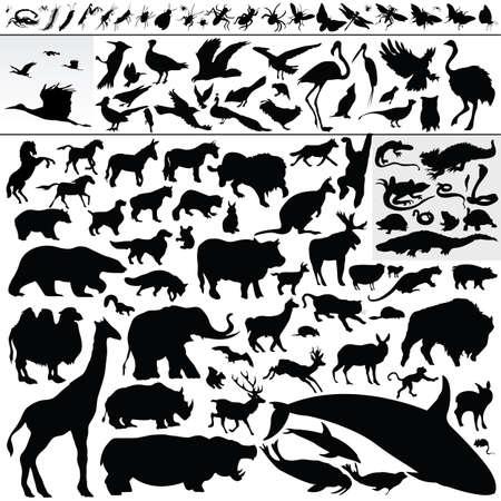 whale: animals