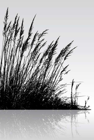 reeds: reeds in the water Illustration