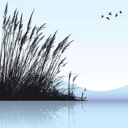 水の葦 写真素材 - 6233135