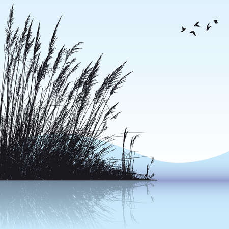 reeds in the water Vector