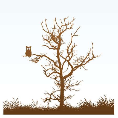 나무에 올빼미 일러스트