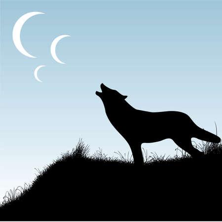 moon shadow: wolf Illustration