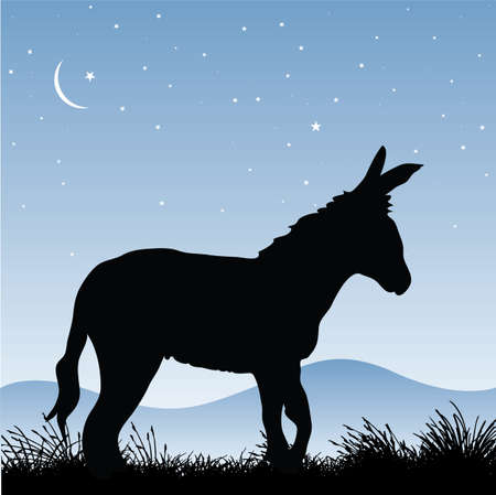 Donkey Illustration